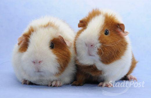 Hamster Kaufen Heppenheim